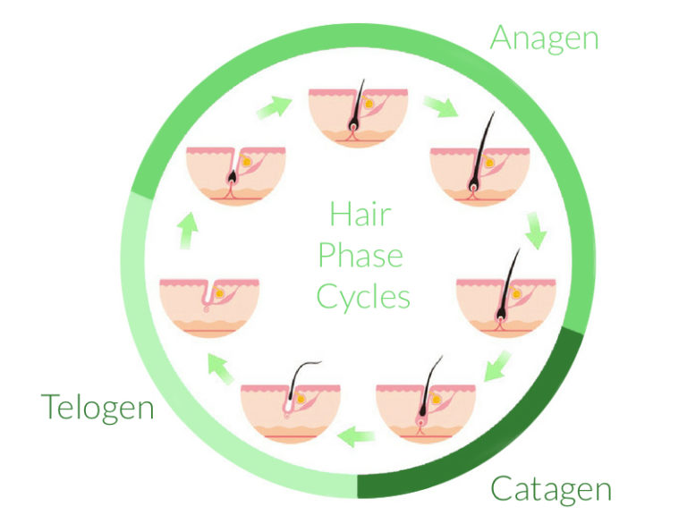 Hair Phase Cycles | Everything Skin Manchester
